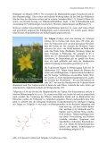 Kulturgeschichtliches zur Pflanzenordnung Lilienartige ... - GTFCh - Page 3