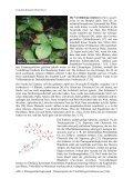 Kulturgeschichtliches zur Pflanzenordnung Lilienartige ... - GTFCh - Page 4