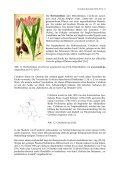 Kulturgeschichtliches zur Pflanzenordnung Lilienartige ... - GTFCh - Page 7