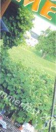 8. Ausgabe - Juli 2003 - Stiftung Maria Ebene