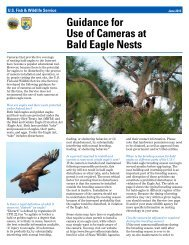 Guidance for Use of Cameras at Bald Eagle Nests - U.S. Fish and ...