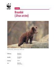 (Ursus arctos) - WWF Schweiz