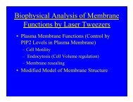 Biophysical Analysis of Membrane Functions by Laser Tweezers
