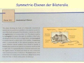 Plathelminthes