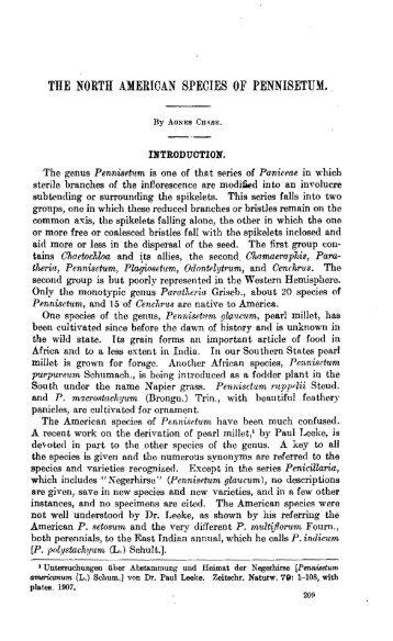 THE NORTH AMERICAN SPECIES OF PENNISETUM.