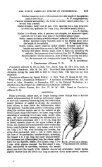 THE NORTH AMERICAN SPECIES OF PENNISETUM. - Page 5