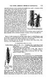 THE NORTH AMERICAN SPECIES OF PENNISETUM. - Page 7