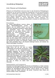K2b Pflanzen auf Silikatfelsen.pdf