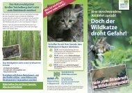 Doch der Wildkatze droht Gefahr! - Bund Naturschutz in Bayern eV