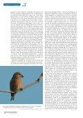 Herbst 2013 - Dachverband Deutscher Avifaunisten - Page 5