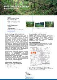 BIESDORFER KEHLEN - NABU-Stiftung Nationales Naturerbe