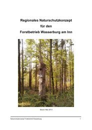 Naturschutzkonzept Forstbetrieb Wasserburg - Bayerische ...
