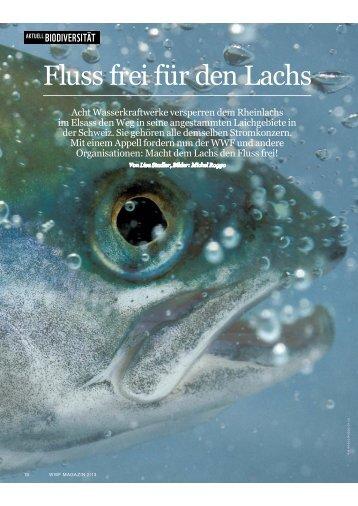 Fluss frei für den Lachs - WWF Schweiz