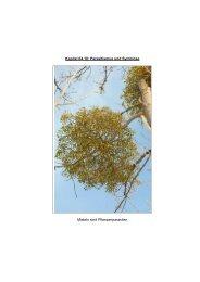 Kapitel 04.10: Parasitismus und Symbiose Misteln ... - Hoffmeister.it