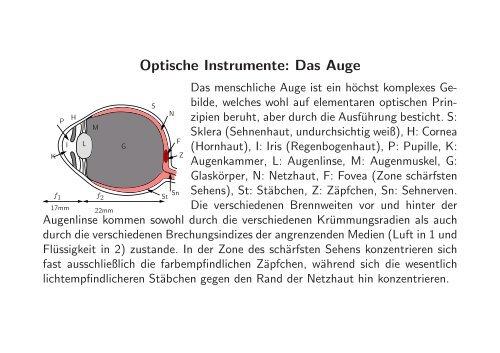 Optische Instrumente: Das Auge
