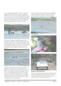 Vol. 17, No. 2 September 2006 - Indigenous Flora and Fauna ... - Page 7
