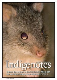 Here - Indigenous Flora and Fauna Association