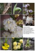 Here - Indigenous Flora and Fauna Association - Page 7