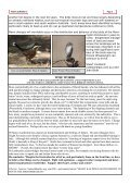 SPIFFA NEWSLETTER - Indigenous Flora and Fauna Association - Page 3