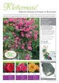 Erlesene Rosen und Begleitpflanzen Jetzt ist ... - Kordes Rosen - Seite 3