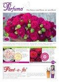 Erlesene Rosen und Begleitpflanzen Jetzt ist ... - Kordes Rosen - Seite 5
