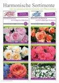 Erlesene Rosen und Begleitpflanzen Jetzt ist ... - Kordes Rosen - Seite 6
