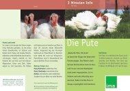 Die Pute - information.medien.agrar eV