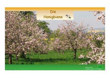 """Unterrichtsbaustein """"Honigbiene"""" - information.medien.agrar eV"""