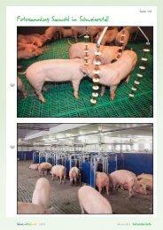 Fotosammlung Sauwohl im Schweinestall