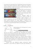 Charakterystyka produktów radarowych - Instytut Meteorologii i ... - Page 7