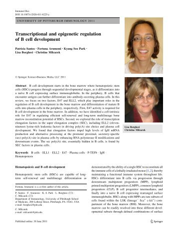 Transcriptional and epigenetic regulation of B cell development