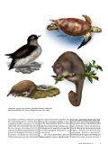 WWF MAGAZIN 4/13 7 - Page 3