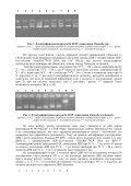 скачати повний текст статті в форматі PDF - Page 3