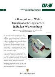 Dauerbeobachtungsflächen in Baden-Württemberg