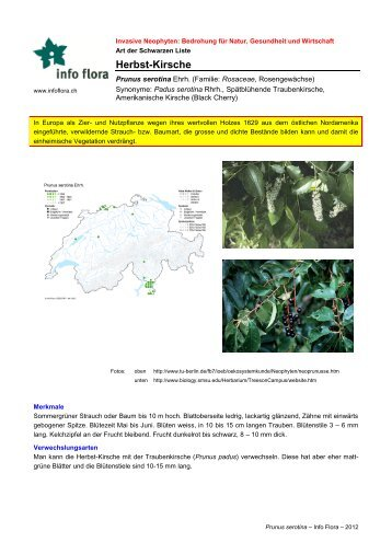 Prunus serotina - Info Flora