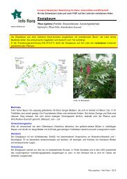 Rhus typhina - Info Flora