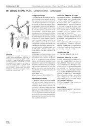 EN Gentiana prostrata HAENKE – Gentiane couchée ... - Info Flora