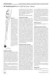 EN Gladiolus palustris GAUDIN – Glaïeul des marais ... - Info Flora