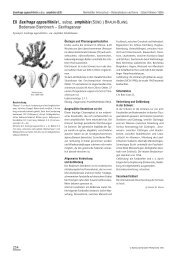 EX Saxifraga oppositifolia L. subsp. amphibia (SÜND ... - Info Flora