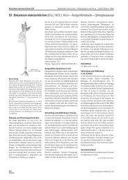 EX Botrychium matricariifolium (DÖLL) W.D.J. KOCH ... - Info Flora