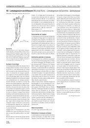 VU Lomatogonium carinthiacum (WULFEN) RCHB ... - Info Flora