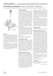 EN Diphasiastrum complanatum (L.) HOLUB – Lycopode ... - Info Flora