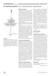 CR Botrychium virginianum (L.) SW. – Botryche de ... - Info Flora