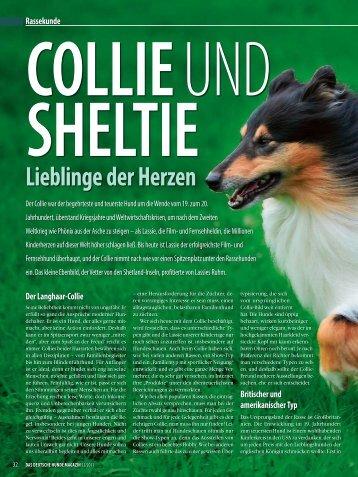 Rasseporträt Collie und Sheltie Deutsches ... - Infohund