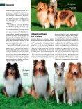 Rasseporträt Collie und Sheltie Deutsches ... - Infohund - Seite 3
