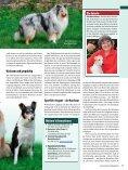 Rasseporträt Collie und Sheltie Deutsches ... - Infohund - Seite 4