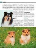 Rasseporträt Collie und Sheltie Deutsches ... - Infohund - Seite 5