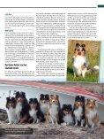 Rasseporträt Collie und Sheltie Deutsches ... - Infohund - Seite 6