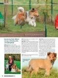 Rasseporträt Collie und Sheltie Deutsches ... - Infohund - Seite 7