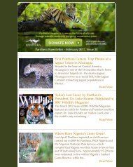 February 2012 Newsletter - Panthera